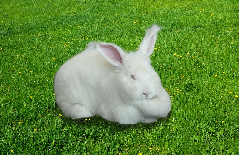 兔子518-518